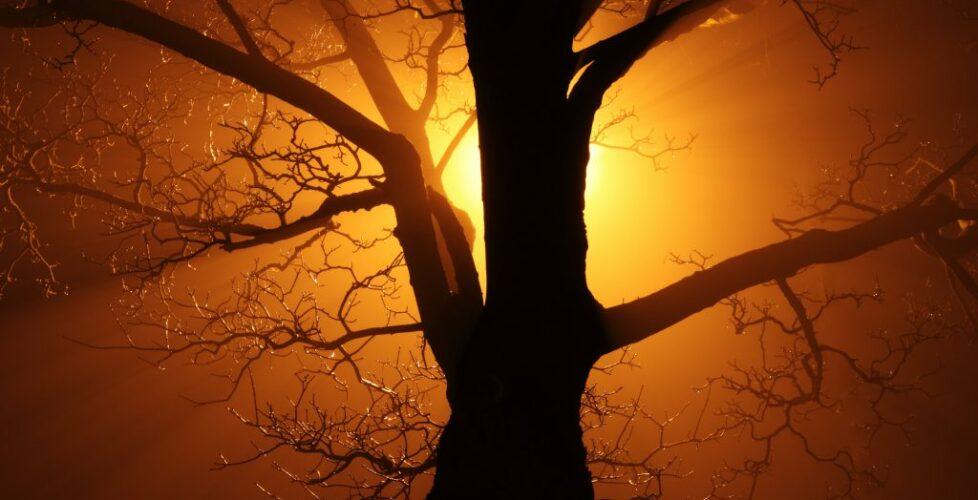 tree_in_fog_at_night_184570